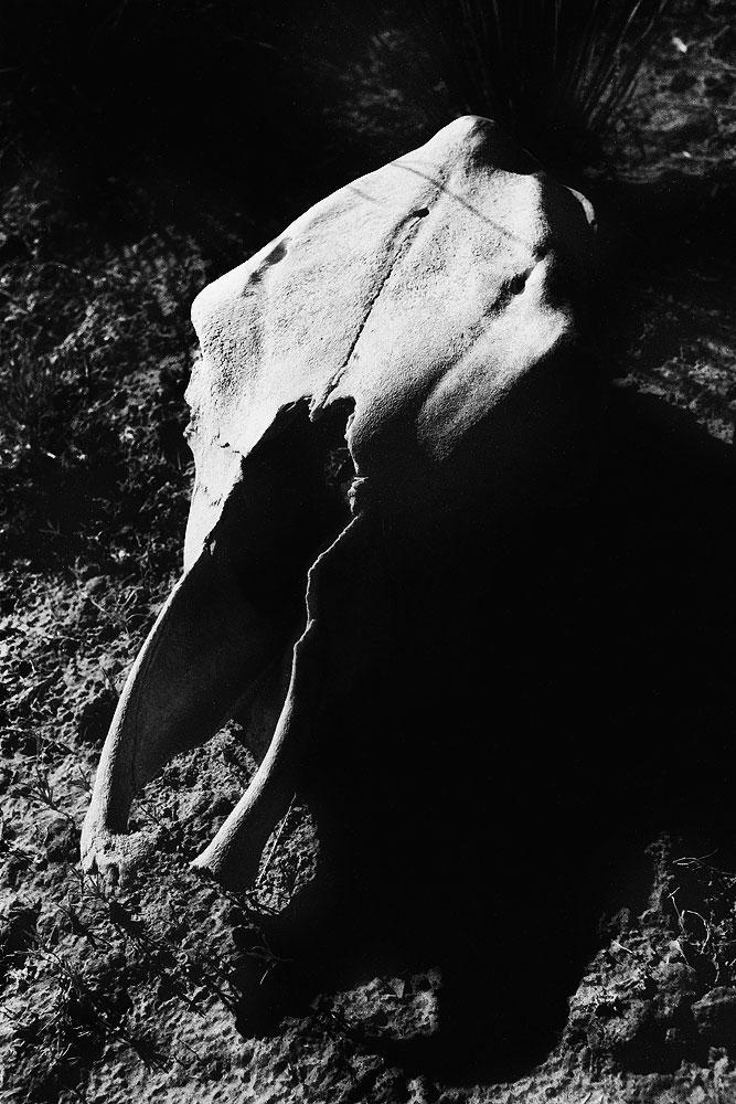 003_Skull