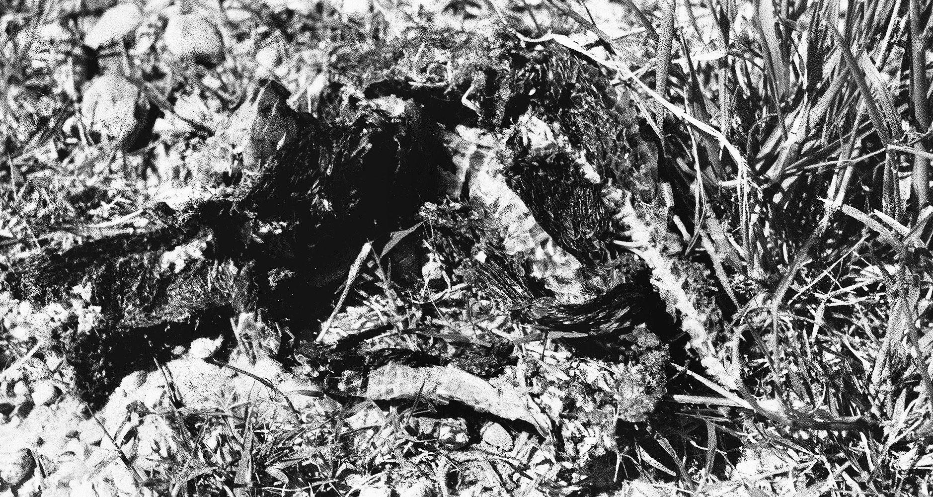 Schlangenhaut_hell_crop